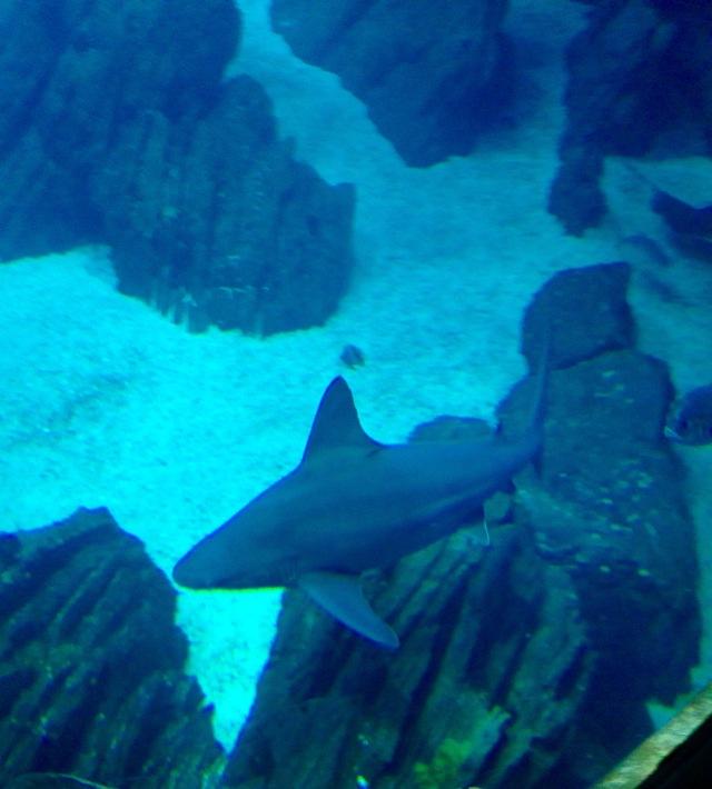 sharksoceanariumlisbon portugal mbcosblog travelwithme