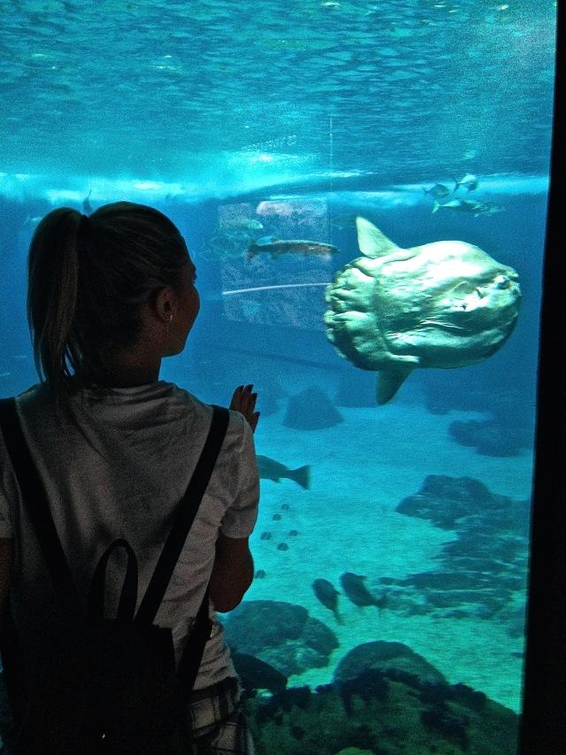 sealife lisbon portugal oceanarium mbcosblog