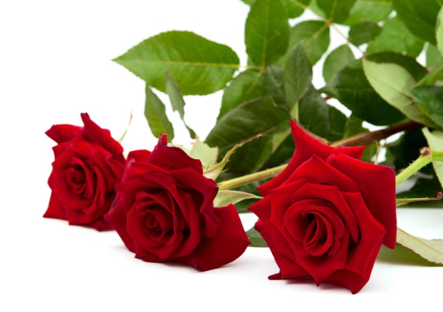 flowers_red_roses_bouquet-03